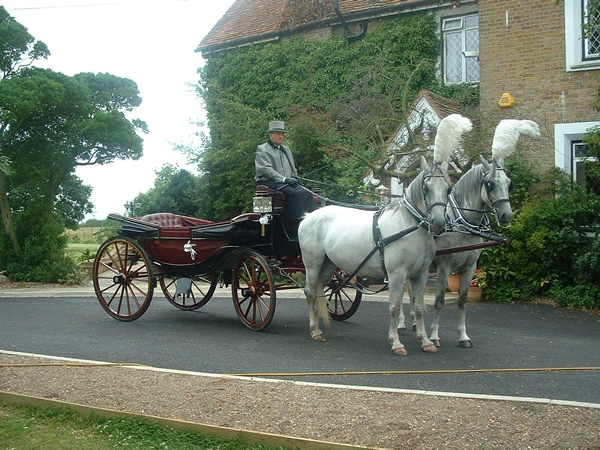 horse and carriage wedding Essex and London