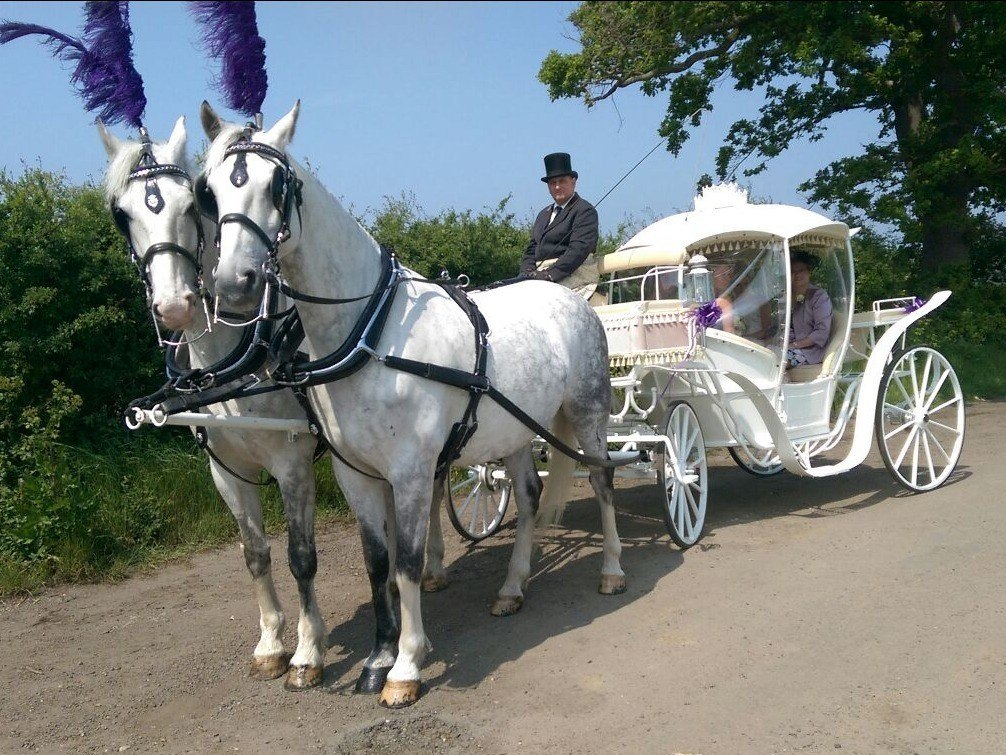 Traditional Horse-drawn Prom Coaches